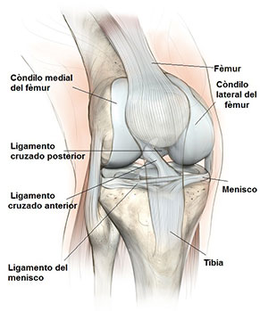 artritis de rodilla